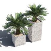 Artificial Cycas Palm