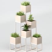 Комнатные растения: полка с растениями 2