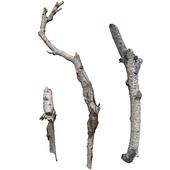 Березовые ветки