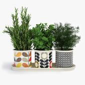 Potted Plants Orla Kiely Herb Pots