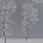 Winter Ash | Ash-tree winter # 5 (21.2m)
