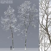 Winter Ash | Ash-tree winter # 6 (19.8-22.6)