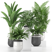 Коллекция комнатных растений 03