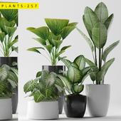 plants 257