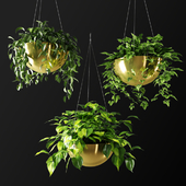 Ampel plants in gilded flower pots