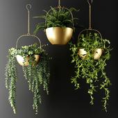 Ампельные растения в бронзовых кашпо | Ampel plants in bronze flower pots