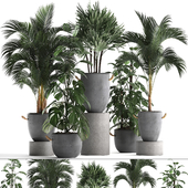Plant Collection 408.