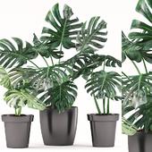 Plants 164