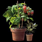 Plant set 06