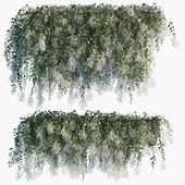 Plant in pots #49 : Vernonia elliptica flowering