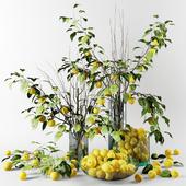 Букет из веток яблони китайки с желтыми яблоками