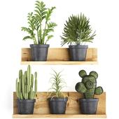 Коллекция растений 410.