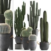 Коллекция растений 411. Cactus set.