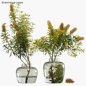 Branches in vases #28 : Banksia