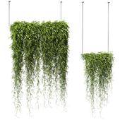 Растения в подвесных кашпо v2. 2 модели