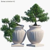 Bonsai collection #2