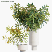 Branches in vases 29