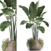 Коллекция растений 412. Banana