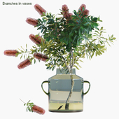 Branches in vases 31