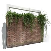 brick wall planter | Tarlmounia elliptica