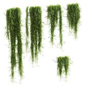 Свисающие растения для полок. 5 моделей. набор 1