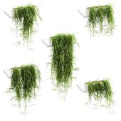 Свисающие растения для полок. 5 моделей. набор 2