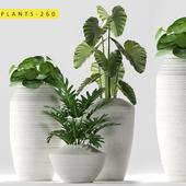 plants 260