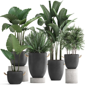 Коллекция растений 415.