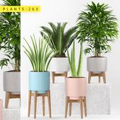 plants 263