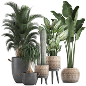 Plant Collection 417.