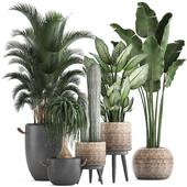 Коллекция растений 417.
