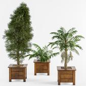 Outdoor Plants in Wooden Pot
