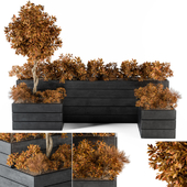 outdoor-plants  Flower Box Fall Color