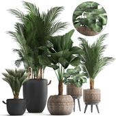 Коллекция растений 422.