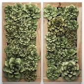 Вертикальное озеленение. 53 Echeveria