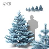 Голубая ель (2 метра)