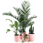 plants 8