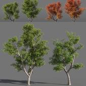 Деревья (лето-осень) #1