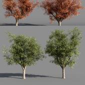 Деревья (лето-осень) #4