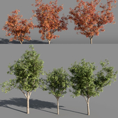 Деревья (лето-осень) #5