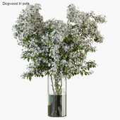 Branches in vases 34