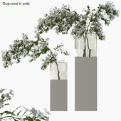 Branches in vases 35