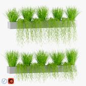 Plants in tubs v2