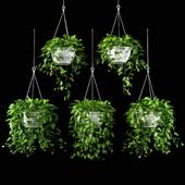 plants set 13