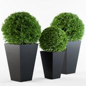 Outdoor Plants Round