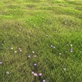 arch_grass 05