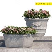 plants 267