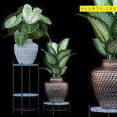 plants 268