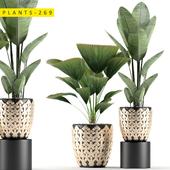 plants 269