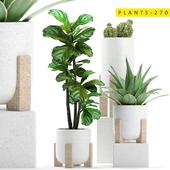 plants 270